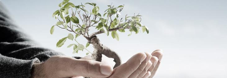 فوائد كريم شجرة الشاي